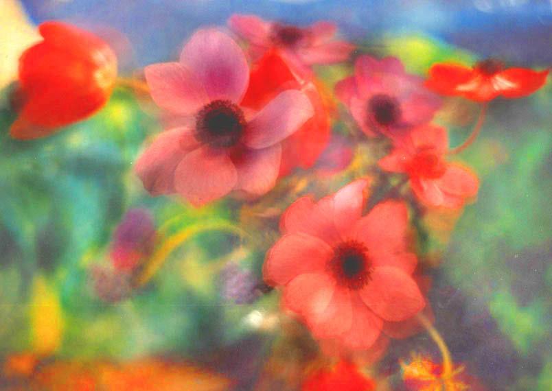 Anemonies, tulips, blue sky