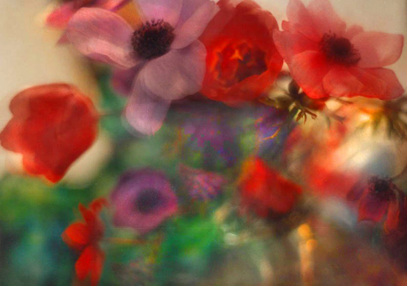 Tulips, anemonies