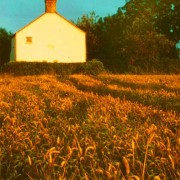 Cottage in the fields, sunset