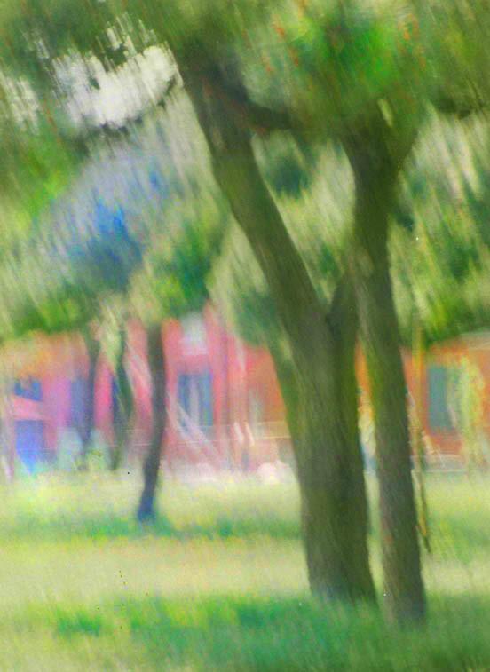 Pine glade, Burano