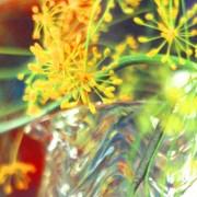 Wavy jug, yellow blooms