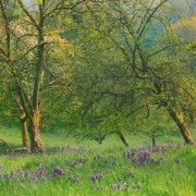 Orchard in Spring, Dorset