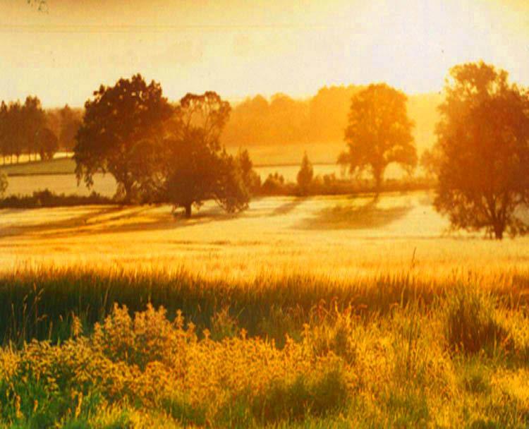 Gold fields, evening sun