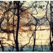 Snowy field seen through winter branches