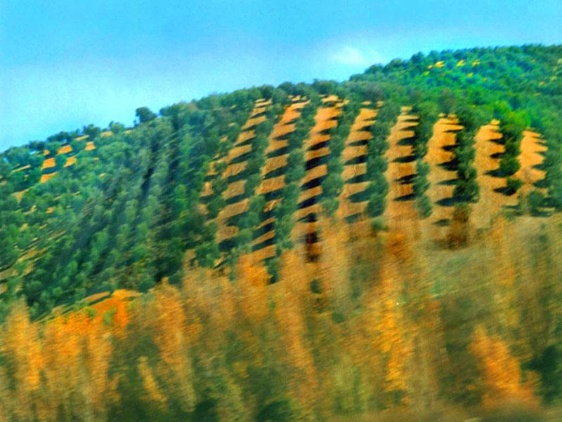 Olive hills, Spain