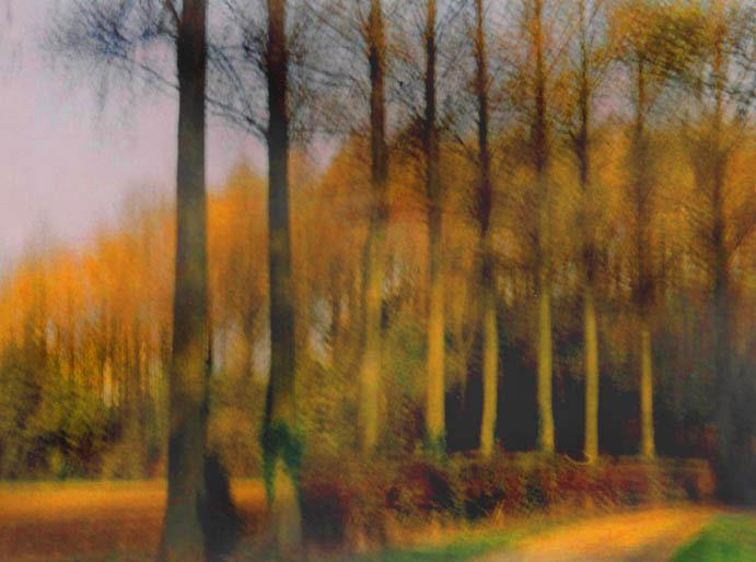 Poplars, Lincolnshire