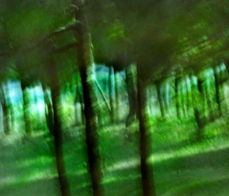 Pine grove, Malta 4