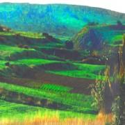 Small fields, Malta, Spring