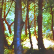 home page thumbnail Sunlit clearing with blue trunk