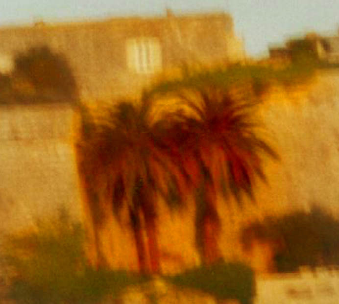 Palms, Mdina walls, late sun