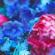 home page thumbnail Blown paeony, blue geraniums