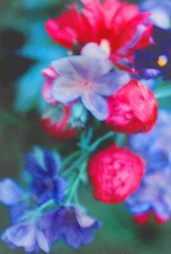 Paeony buds, blue geranium, dusk