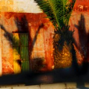 Palms and shadows