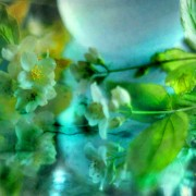 Wet Philadelphus, cool glass