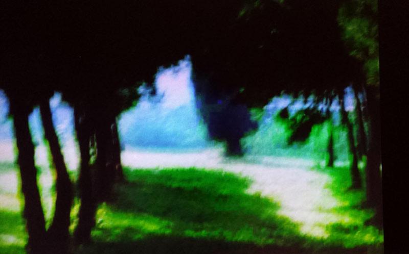 Pine grove, Malta 3