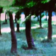 Pine grove, Malta 2
