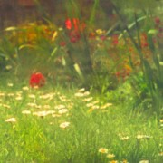 home page thumbnail Secret Garden 4