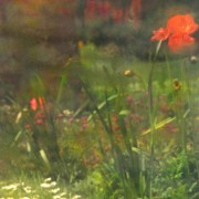 home page thumbnail Secret Garden 6