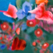 home page thumbnail Blue iris, red daisies, grainy