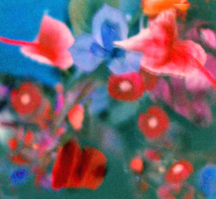 Blue iris, red daisies, grainy