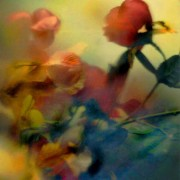 home page thumbnail Silk roses