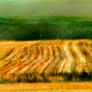 Harvest time, Sussex