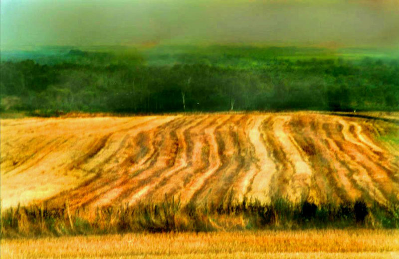 Harvest time, Sussex