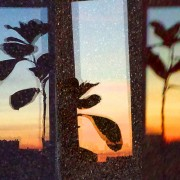 Plant at Sunset 2