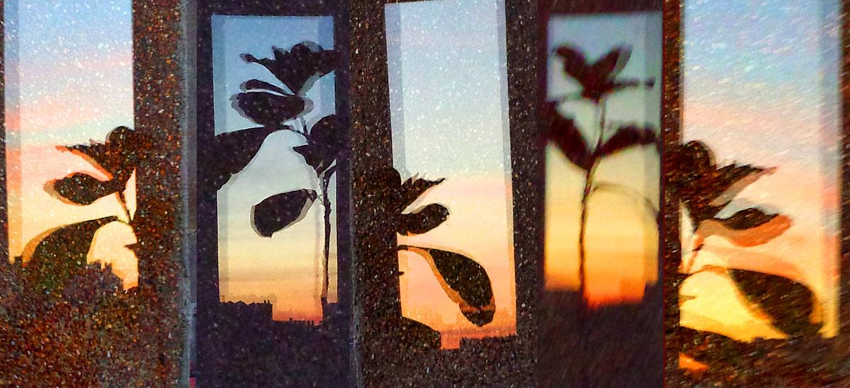 Plant at Sunset 2